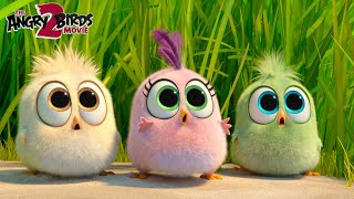 The Angry Birds Movie 2   Behind the Hatchlings' adventures!