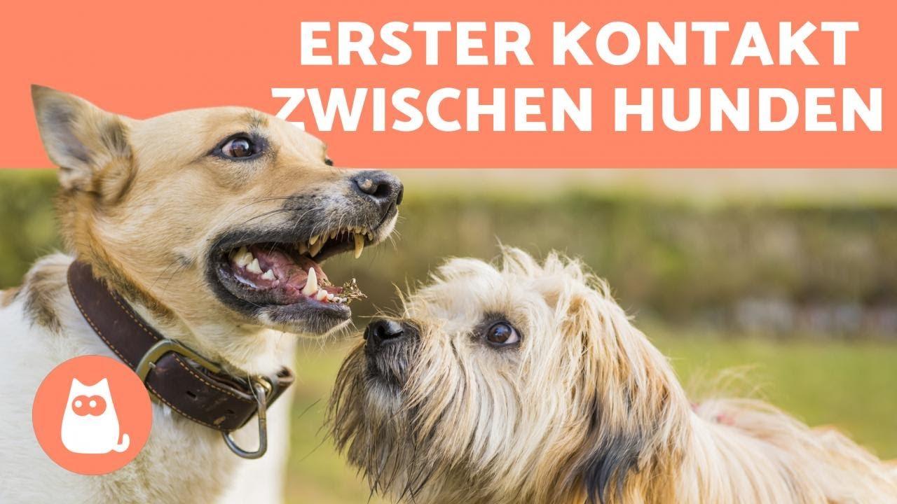 Begegnungstraining mit dem Hund: Hunde bekannt machen