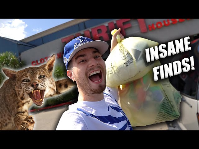 I GOT BAGS OF THRIFT FINDS... AND A BOBCAT! Trip to the Thrift #347
