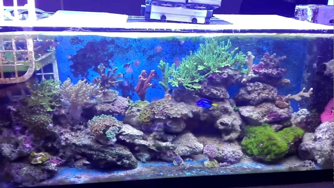 Acquario marino 120 litri senza sump youtube for Acquario 120 litri