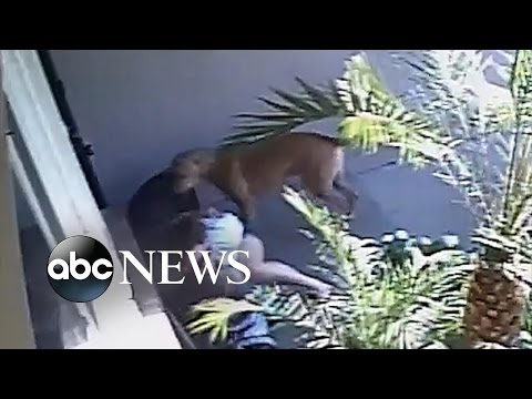 mom,-son-attacked-by-dogs