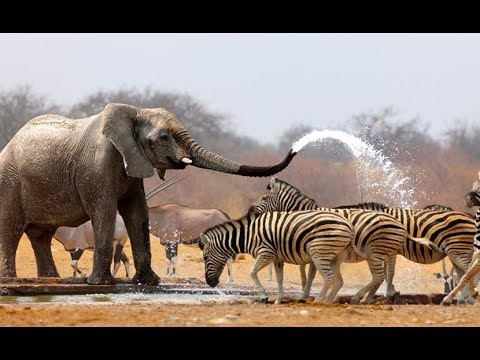 Wildlife of Etosha National Park - Wildlife Documentary & Nature Documentaries