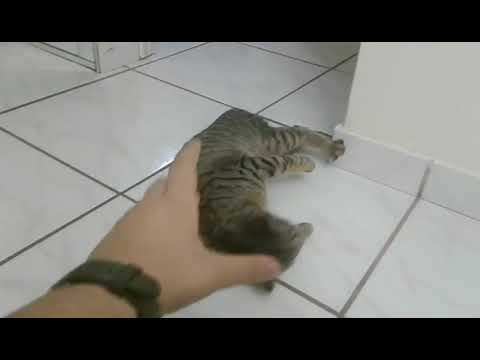 Cat.exe Has Stopped Working Properly