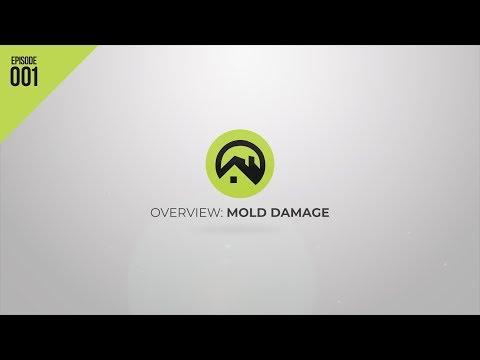 Mold Damage Insurance Lawyers | David Graham Law