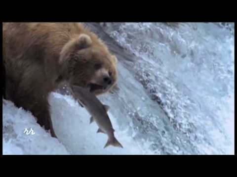 Bear McCreary - Salmon Run