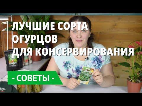 Проверенные сорта огурцов для засолки и маринования