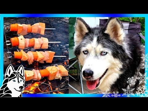 CAMPING SHISH KABOBS DIY DOG TREATS  | Snow Dogs Snacks 53 | Dog Treats