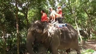 Деревня слонов Паттайя  Тайланд октябрь 2019г