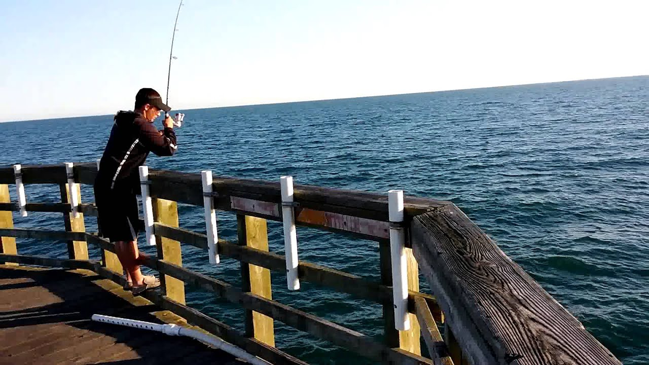 5 3 15 blue fish biting off seaview fishing pier north for Seaview fishing pier