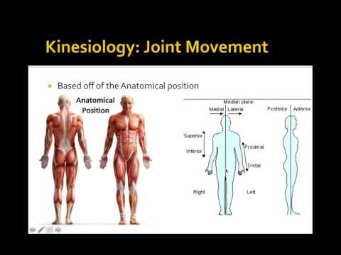 Lecture 3  Biomechanics of Resistance Exercise