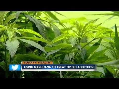 Marijuana to Treat Opioid Addiction