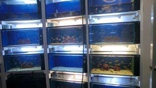 Malawi Aquariumanlage