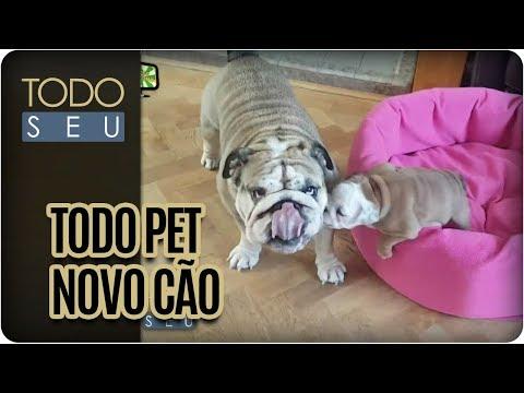 Cuidados Para Receber Um Novo Cachorro Em Casa | Todo Pet - Todo Seu (09/03/17)