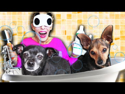 Giving My Dogs a Bath while Blindfolded! (Senior Rescue Dog Reaction)