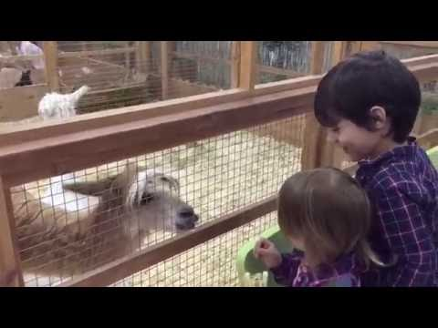 Контактный зоопарк Страна Енотия. ТЦ Водный, Москва. Pets Zoo in Moscow