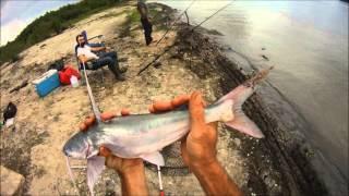 Fishing Mississippi River West Bank Gafftopsail Catfish