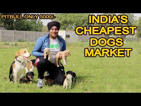 Cheapest Dog Market in Delhi | Pitbull , Bully , Saint bernard Only 5000/-  | VLOG SINGH