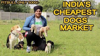 Download Cheapest Dog Market in Delhi | Pitbull , Bully , Saint bernard Only 5000/-  | VLOG SINGH Mp3 and Videos