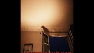 Вызов Духов Египетский кот Смотреть всем Крипипаста Потусторонние