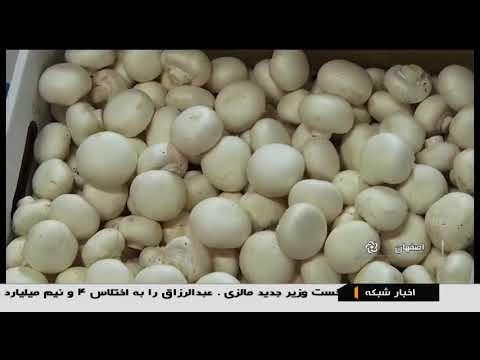 Iran Bottom Mushroom farming, Isfahan province پرورش قارچ دكمه اي استان اصفهان ايران