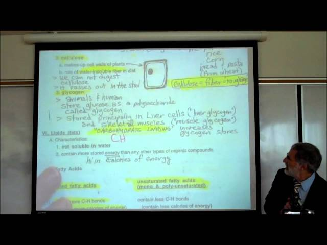 CARBOHYDRATES & FATTY ACIDS by Professor Fink