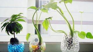 ТОП-5 лучших товаров для комнатных цветов с AliExpress