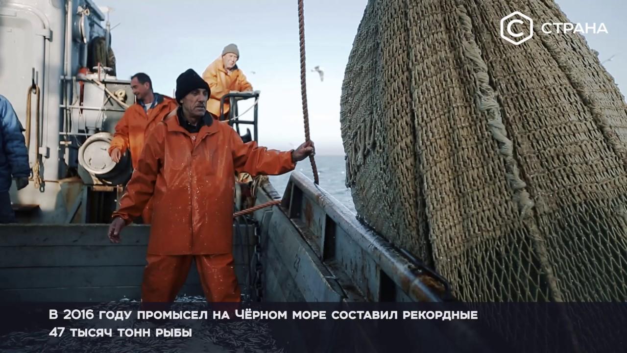 Моря России. Чёрное море | Спецпроект | Телеканал «Страна»