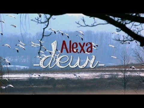 Alexa - Dewi (Lirik & Video)