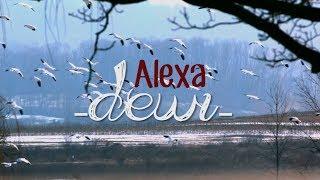 Lagu dewi dirilis tahun 2008. walau saat itu sedang banyak bermunculan band-band baru, Alexa tetap mendapatkan tempat yang cukup baik dipasar musik ...