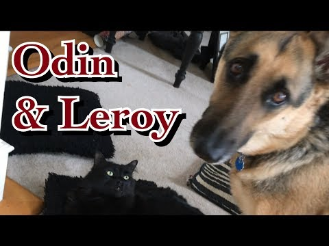Odin & Lazy Leroy