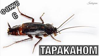 Instagram MAGIC | ФОКУС С ТАРАКАНОМ / magic trick with cockroach
