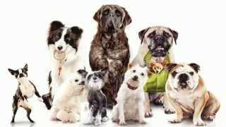 ТОП 5 самых умных пород собак