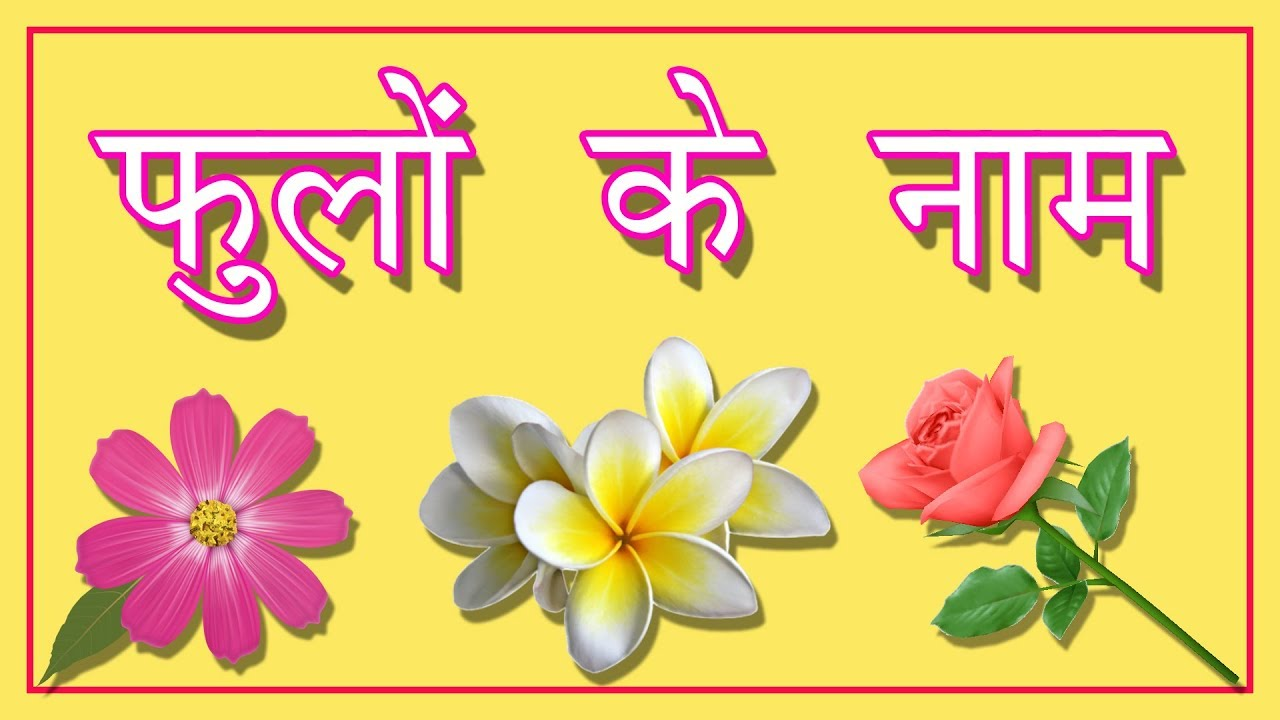 फ ल क न म Flowers Name In Hindi Hindi Nursery