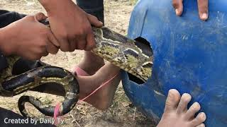 Primitive Technology ; The First Primitive Biggest Snake Trap Made From Gasaline Tank