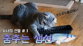 [뉴냐의 선물 ep.1] 물고기가 팔딱팔딱 (춤추는 물…