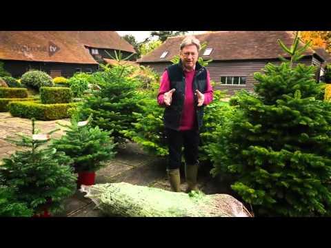 comment-choisir-l'arbre-de-noël-|-comment-faire-un-gâteau-de-noël-2015