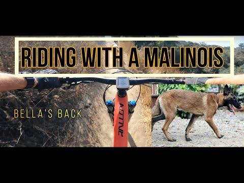 Belgian Malinois Trail Dog - Southern California Mountain Biking - Aliso & Wood Canyon - Lynx Trail