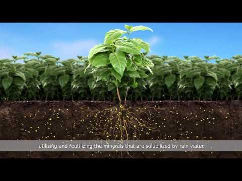 Penergetic - Tecnologia em Bioativação_Inglês