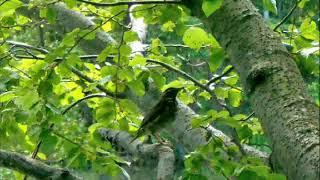 Птицы Среднего Урала