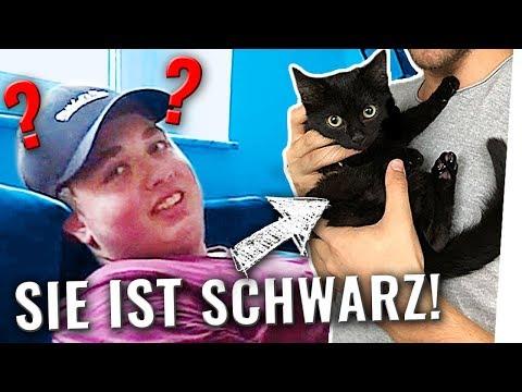 PRANK: Katzen ANGESPRAYT! 😺 (Nicht nachmachen!)