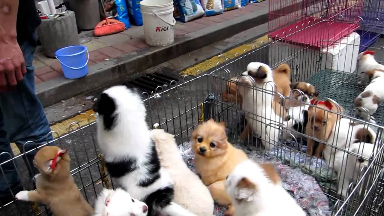 Dog Pets For Sale In Mumbai