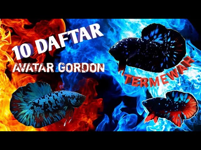 Viral 10 Daftar Cupang Avatar Gordon Series Youtube