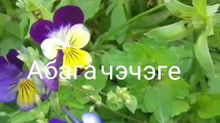 Скачать Дина Багавиева Абага чэчэге Covers клип