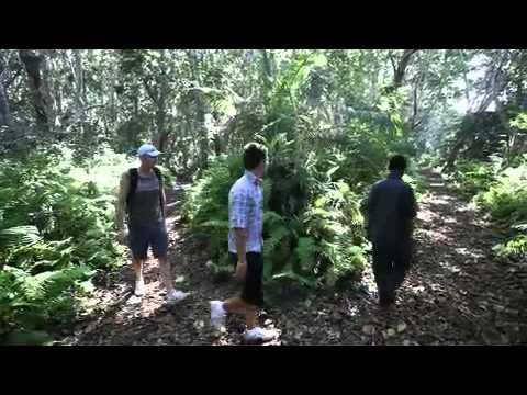 Jozani Forest Zanzibar attractions Zanzibar