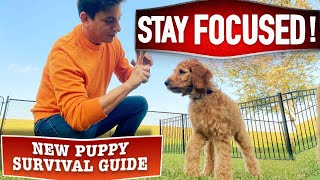 Train ANY Dog To Listen Around ANY Distraction! (New Puppy Survival Guide EP. 19)