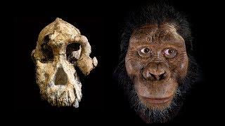 MRD cranium the face of Australopithecus anamensis
