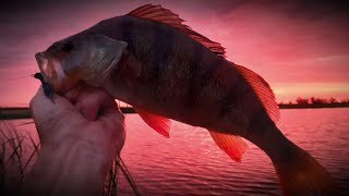 Рыбалка на окуня Ловля окуня отводным поводком Ультралайт