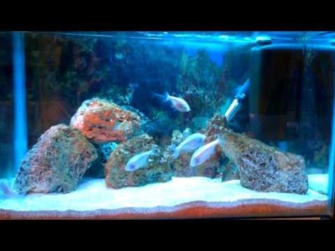 Blind Cave Fish Aquarium Tank And Feeding