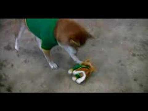 Shibas In American Apparel Dog Tees