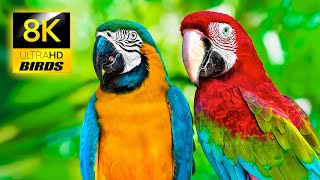 Breathtaking Colorful Birds Collection in 8K ULTRA HD / Relax Forest Ambient